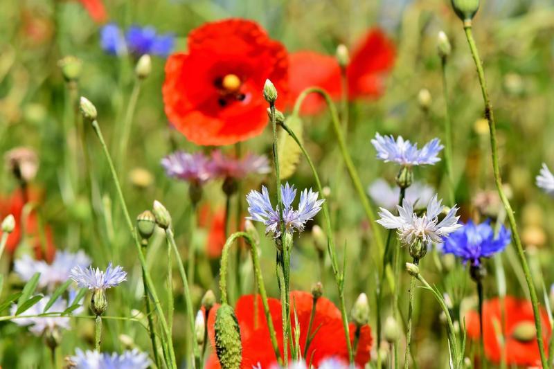 Blüten für einen Sommer
